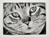 Cat's face, A5. Te koop: €55,-