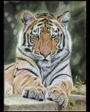 Tijger in pastel, 30x40 cm. €250,-