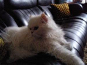 kattenoppas almere