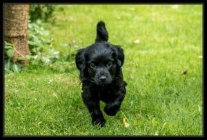 puppyconsult voedingsadvies voor honden