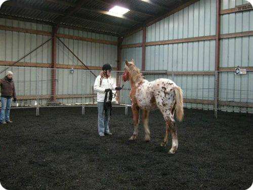 consult en training paard